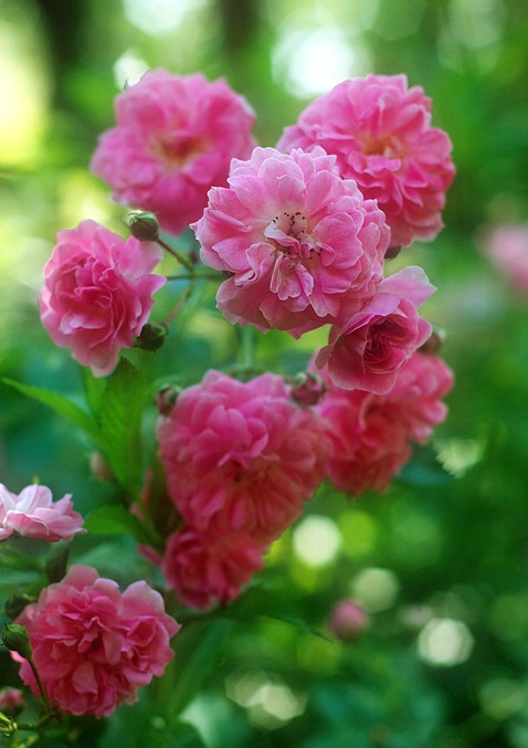 Soft and Fragrant