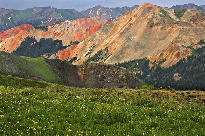 colorado__red_mnts__flowers