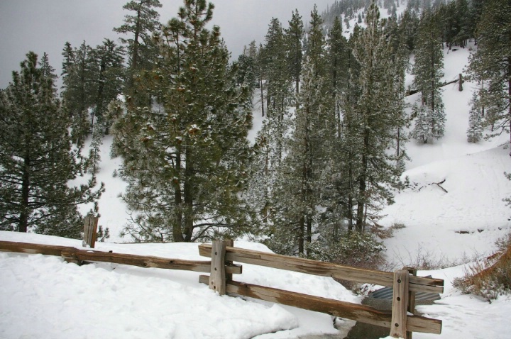 White Winter in Wright wood, Ca