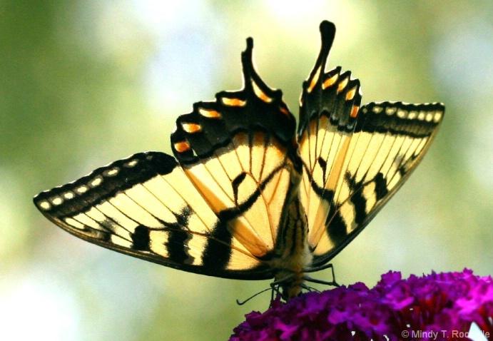 Beneath Her Wings