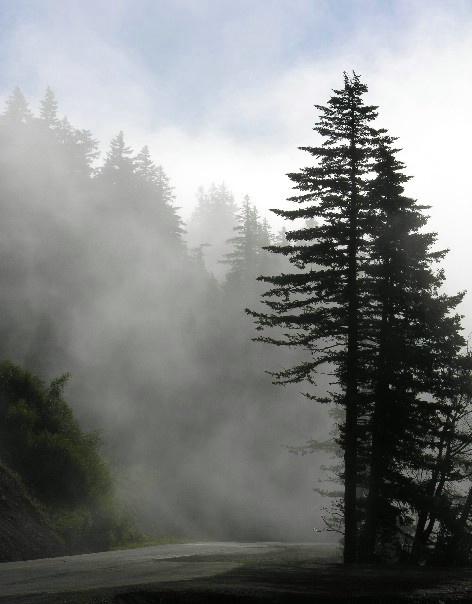 Fog vs. Sun