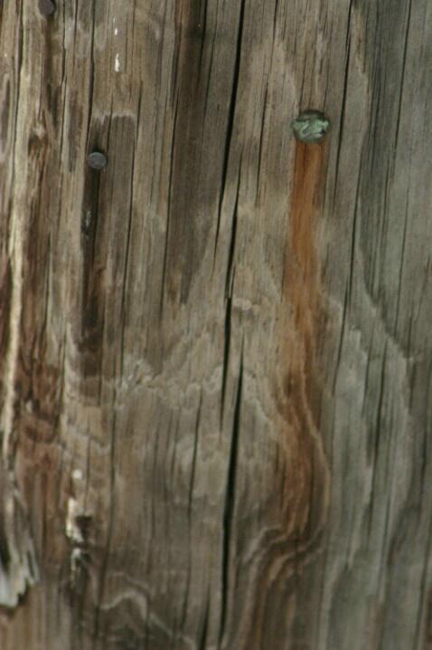 Nail Rust