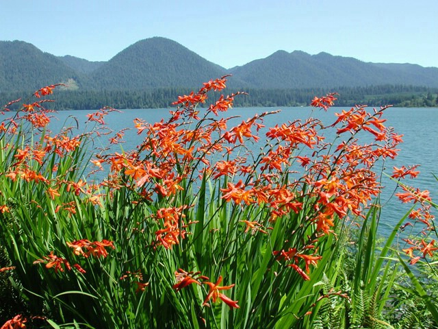 Lake Quinault colors