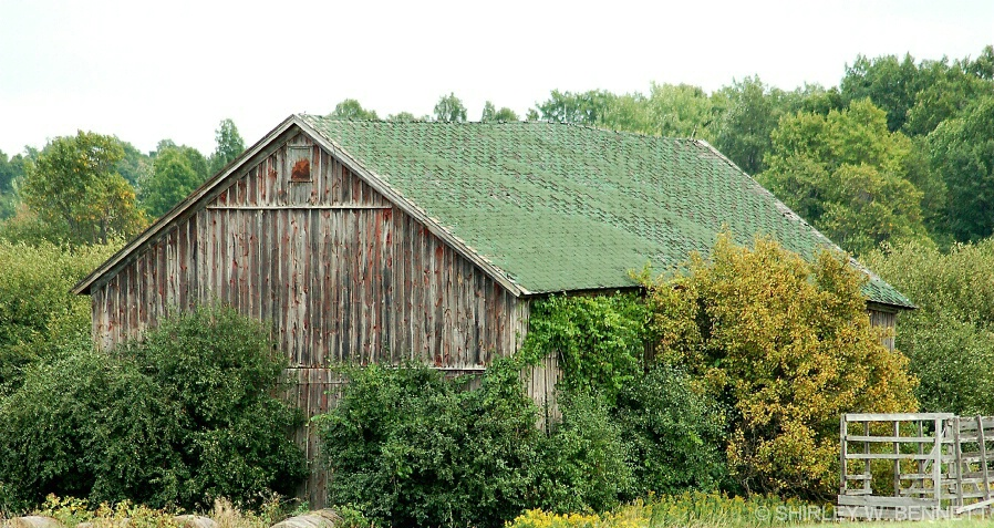barn_with_green_roof