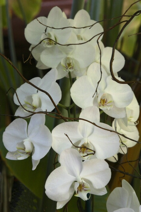 Orchids from Key West