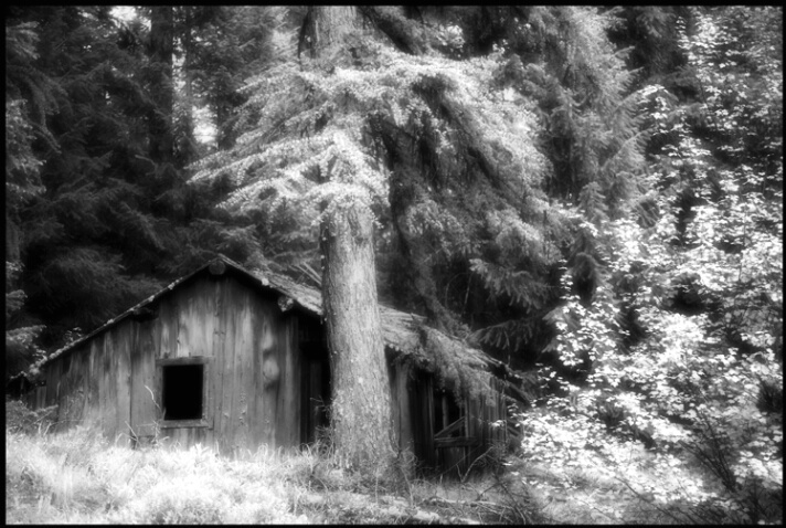 cabin_ghosts_2