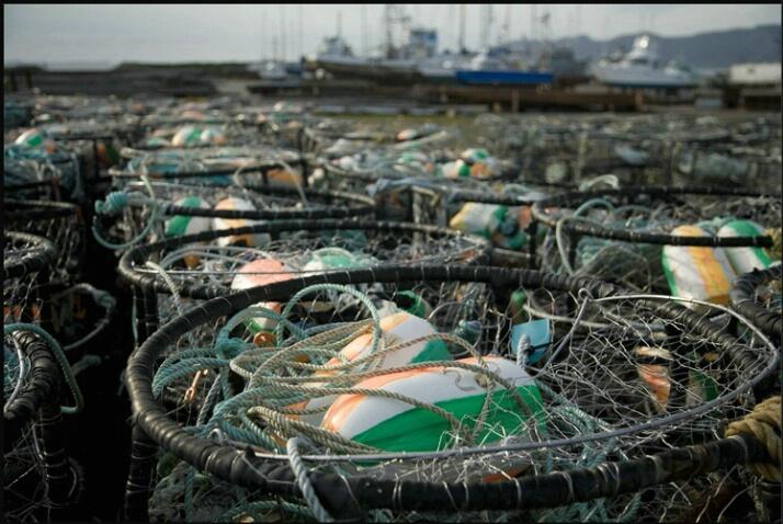 crab_traps_1
