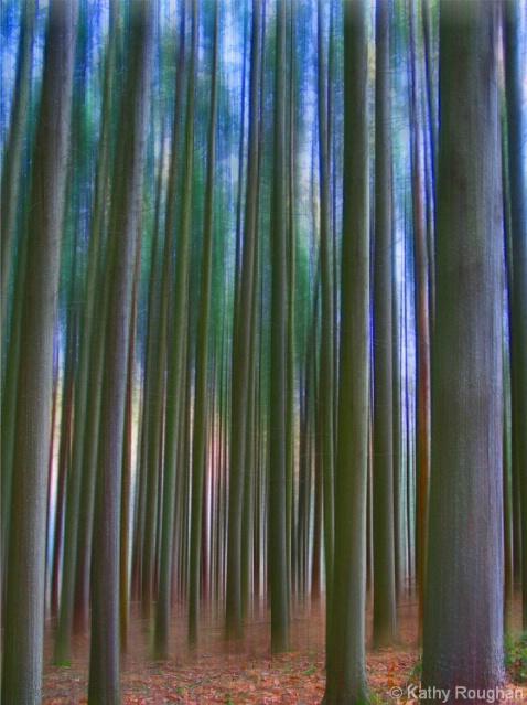 Pine Forest Blur