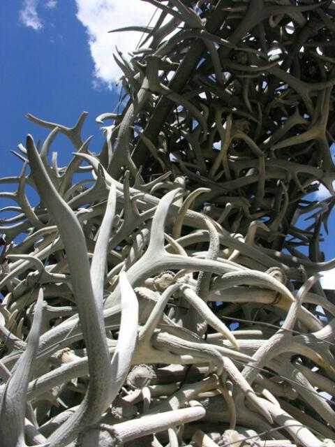 Elk horn arch, Jackson WY