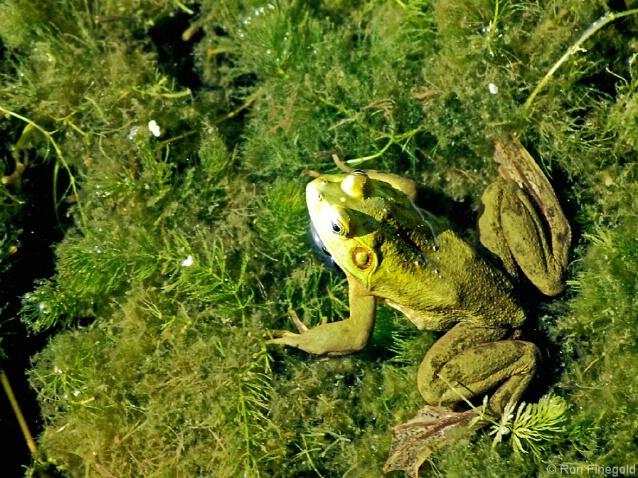 Shine the light on me...............Pig Frog