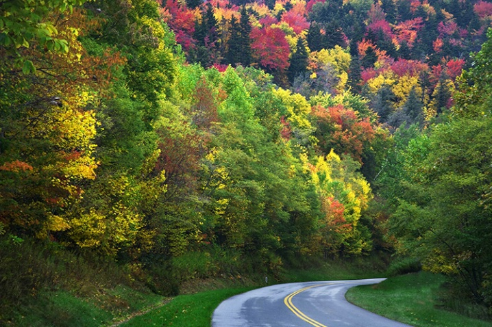 Road into fall color
