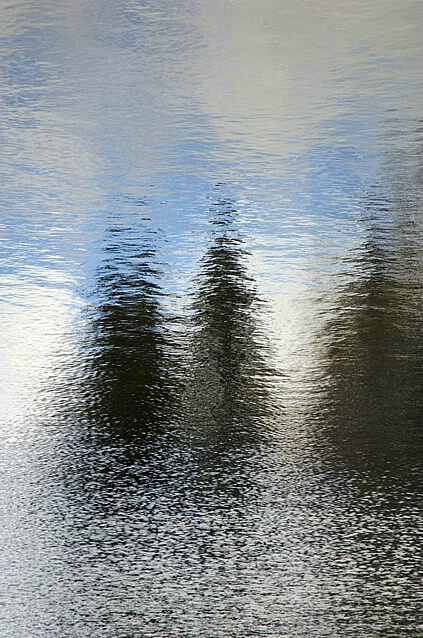 Pines and Water
