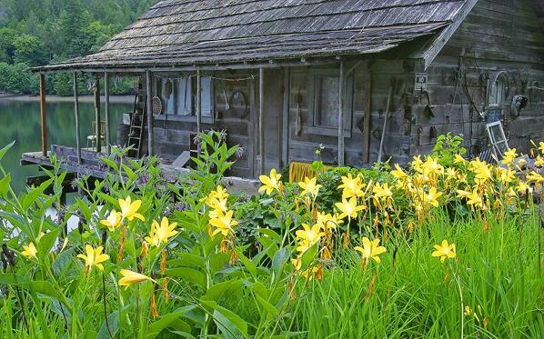 Dewatto Cabin