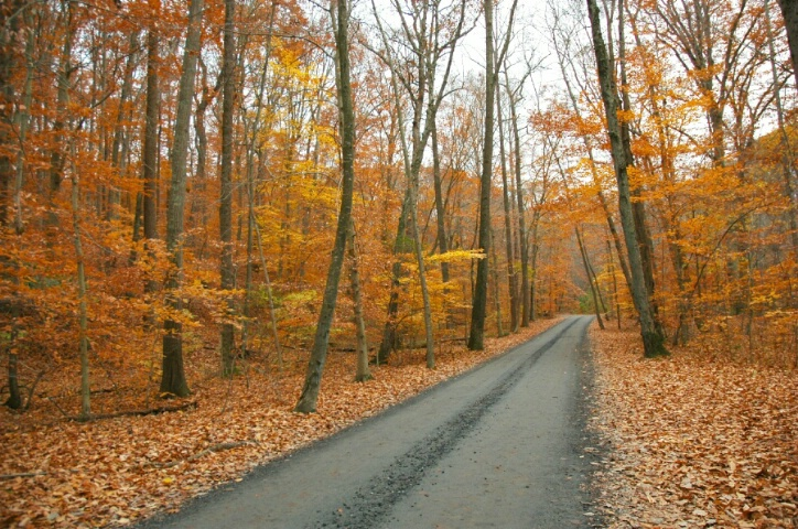 Autumn Road-modified in levels