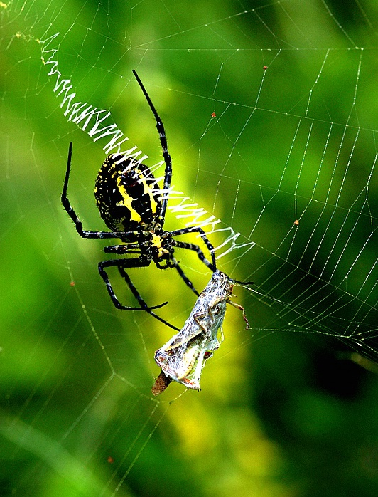 Spider with feed