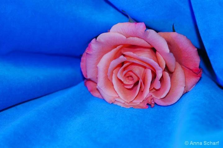 Hidden in blue