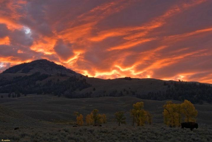 Lamar Valley Sunrise