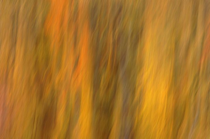 Fall Forest Impression West Virginia