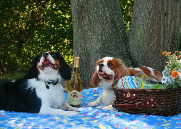 What A Day For A Picnic!