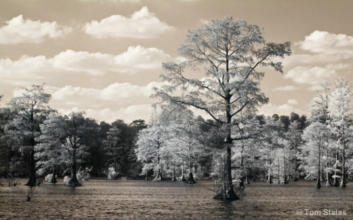 Cypress Swamp - Infrared