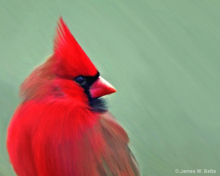 Painted Cardinal II