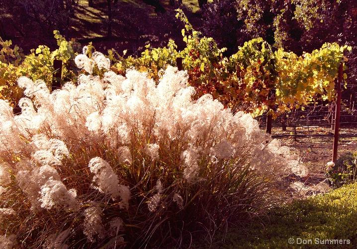 Fall Colors, St. Helena, CA 2007