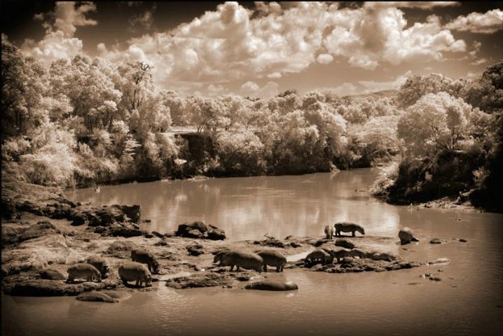 Masai Mara Kenya - Hippo Pool