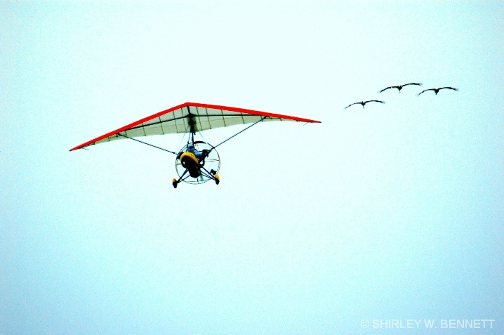 MIGRATING WHOOPING CRANES