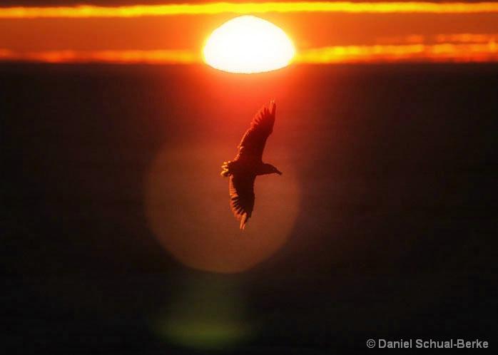 Sunset Spotlight