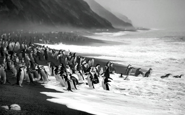 Antarctic Surfers
