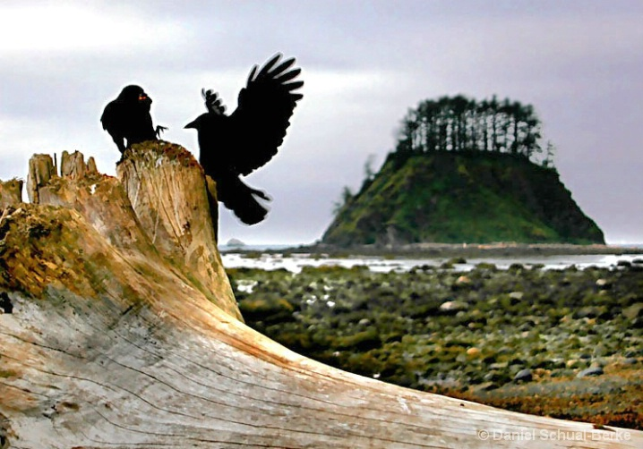 Crows & Driftwood 2