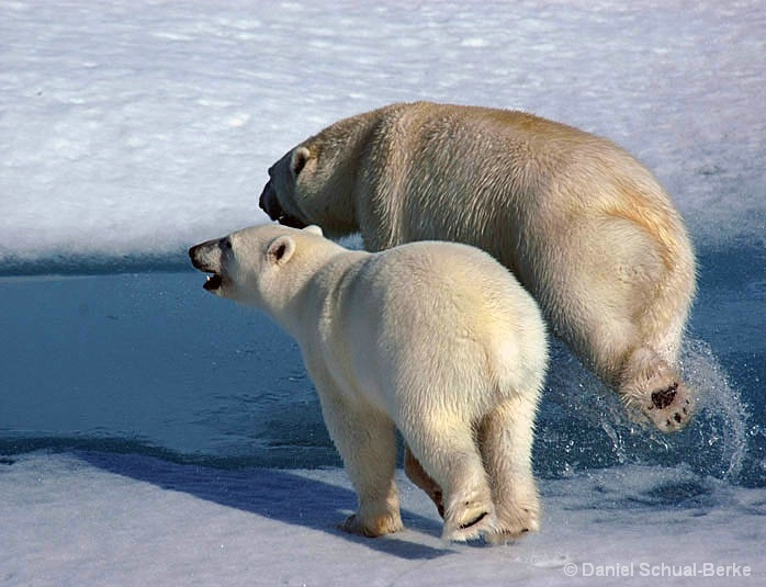 Ice Bear 3