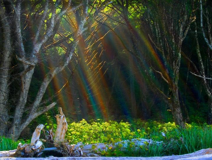 """Rainbow Forest"""