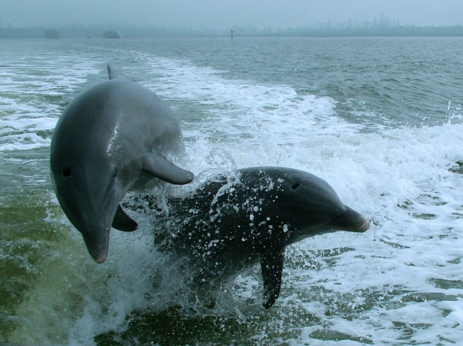 Dolphin Fun Two