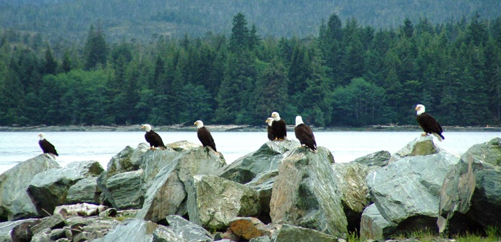 Lined Up Eagles