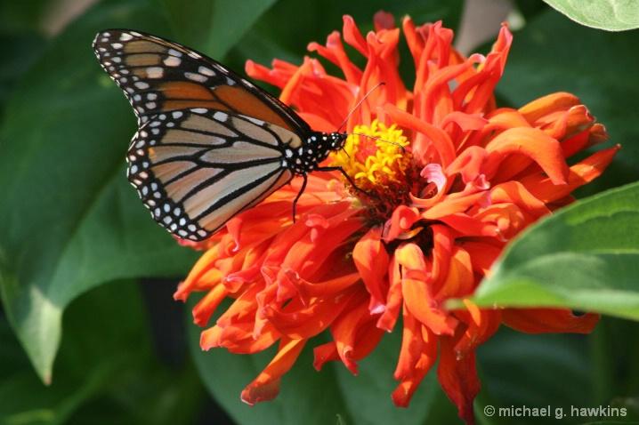 busy butterfly