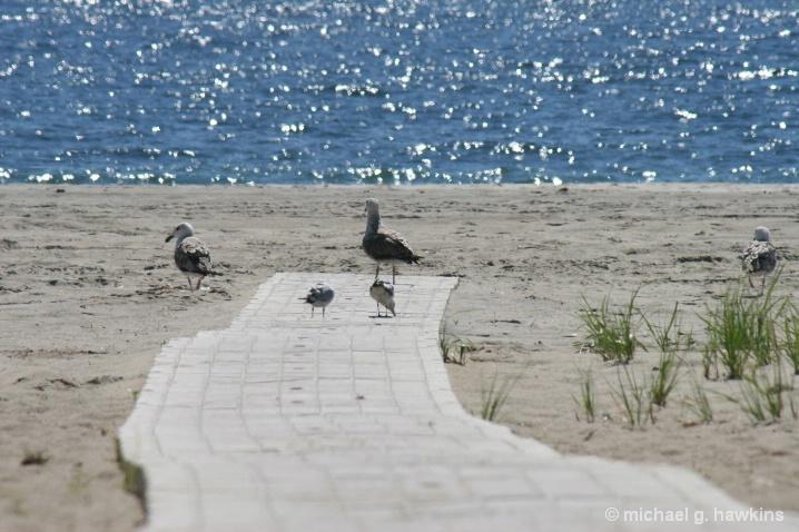 family boardwalk