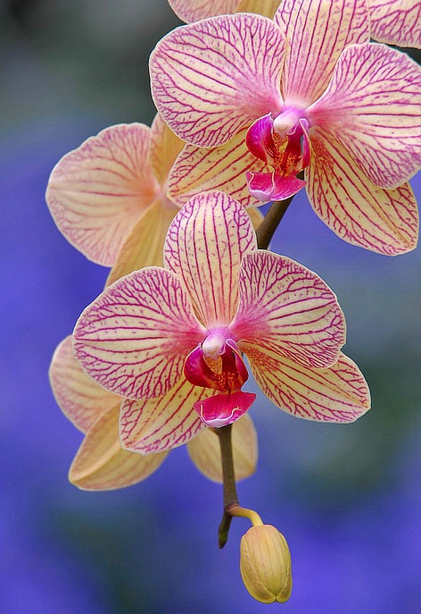 Orchid Time