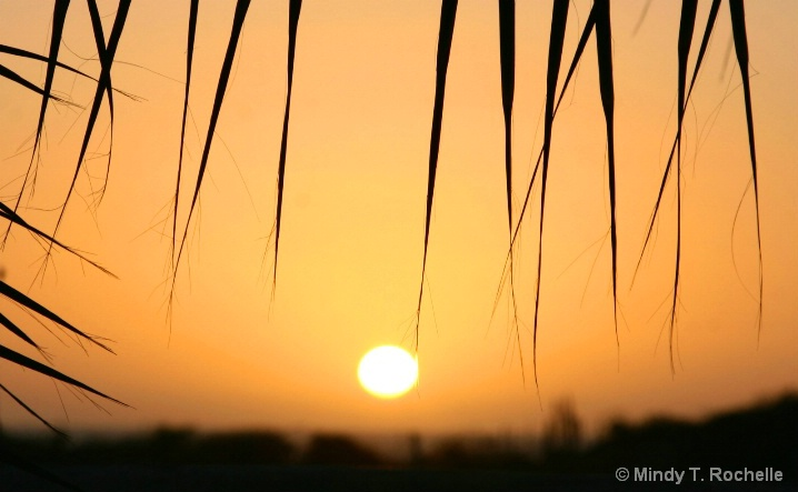 Palm Frond Sunset