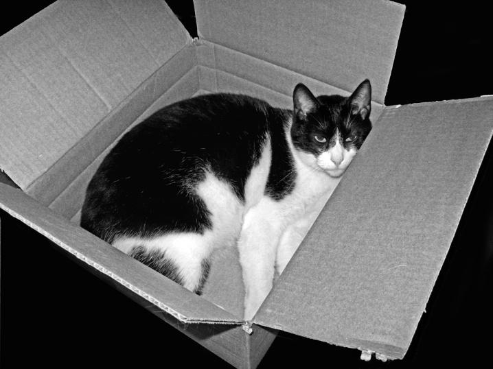 Zorro's Box