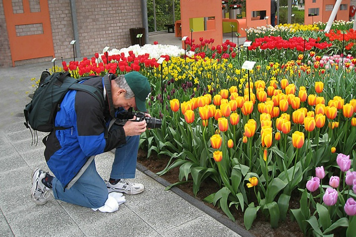 at work in Keukenhof Gardens