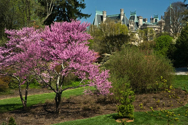 Spring at the Biltmore House