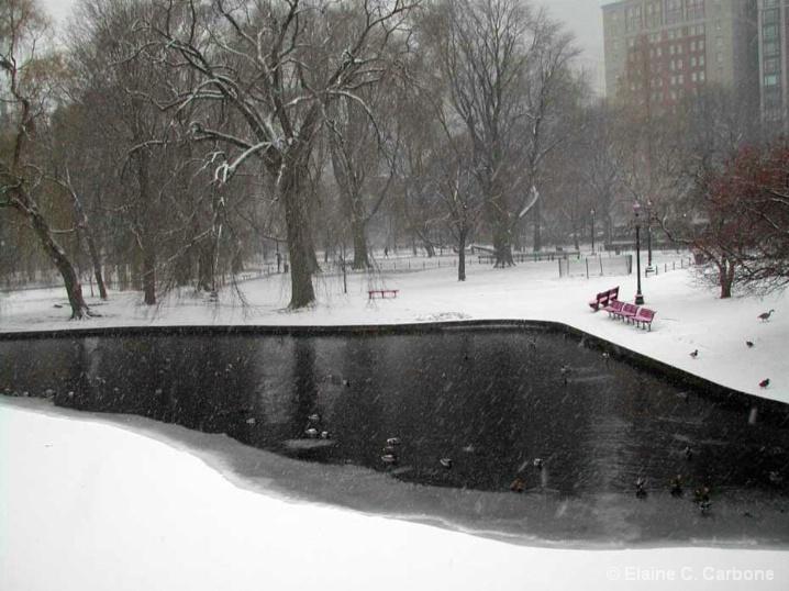 Snow Bench, Boston Garden