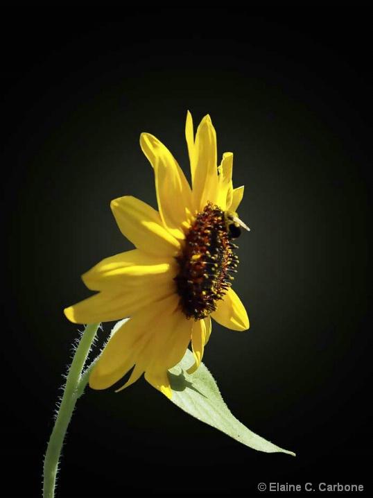 Buzzzy as a Bee