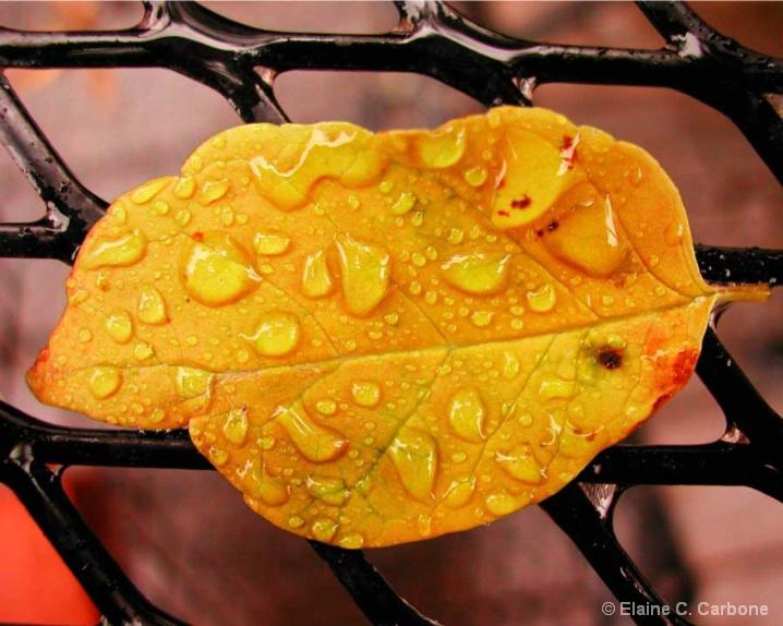 Orange Leaf Water Droplets