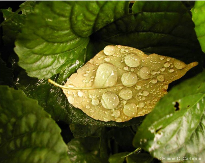 Water Droplets Green Leaf