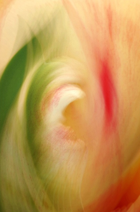 Tulip Multi