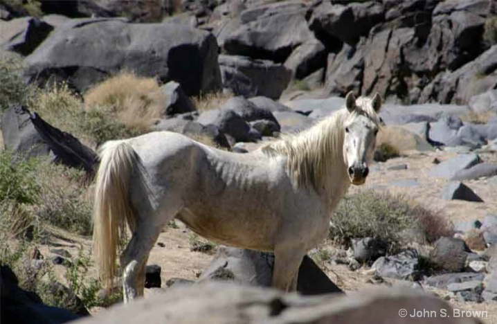 Wild Mustang 281