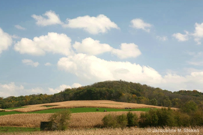 Corn and alfalfa
