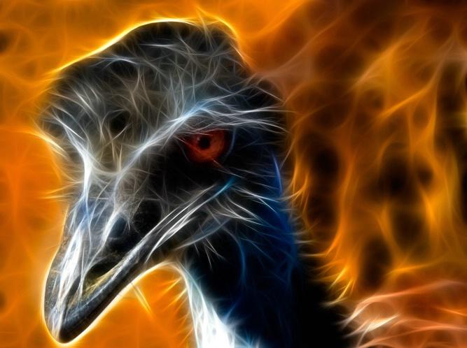 Emus A2